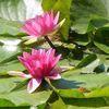 Blüte, See, Wasser, Farben