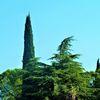 Landschaft, Baum, Zypressen, Italien
