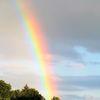 Regenbogen, Sommer, Wald, Licht