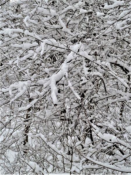 Äste, Schnee, Winter, Struktur, Baum, Fotografie