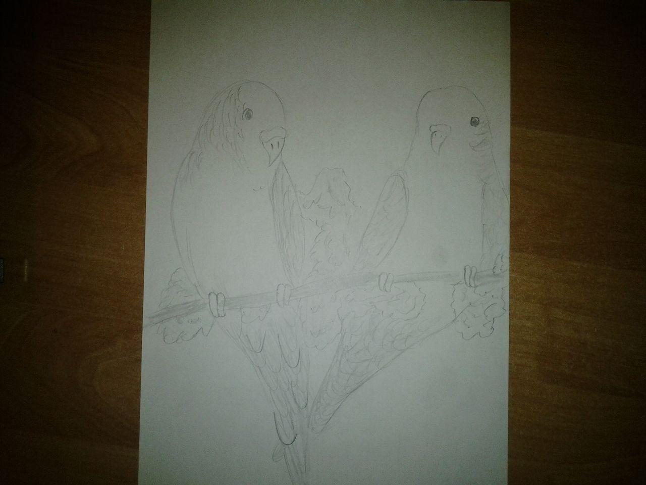 birds online de