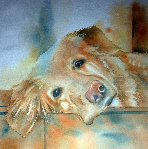 Abschied, Hund, Hundeaugen hovawart, Haustiert, Aquarellmalerei, Freund watercolor