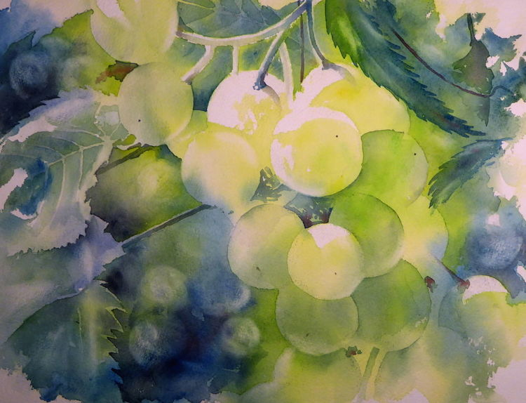 Trauben, Licht, Aquarellmalerei, Weintrauben, Sonnenlicht, Herbst