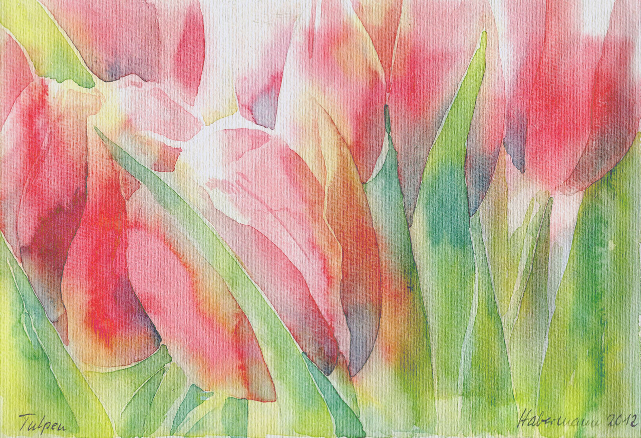 tulpen blumen aquarellmalerei tulpen aquarell von thomas habermann bei kunstnet. Black Bedroom Furniture Sets. Home Design Ideas