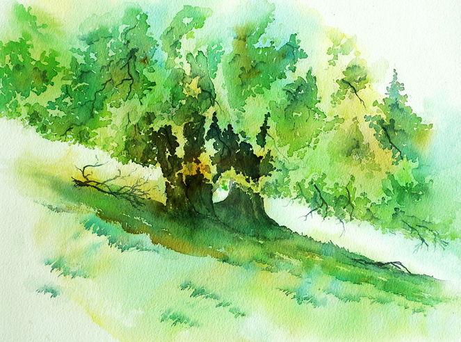 Aquarellmalerei, Rhön, Buch, Baum, Hutebuche, Hochrhön