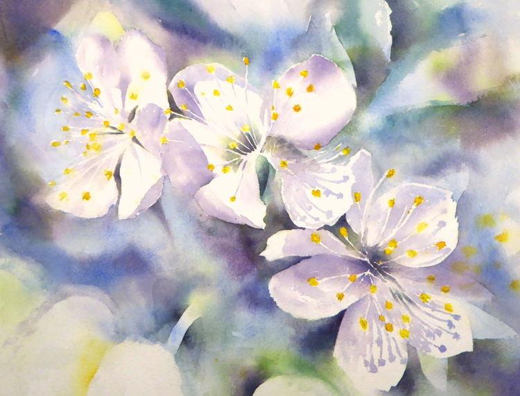 Blüte, Aquarellmalerei, Kirsche, Kirschblüte, Aquarell, Blumen