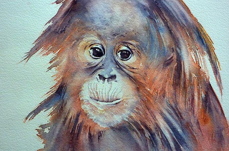 Orang utan, Aquarellmalerei, Tiere, Menschenaffen, Persönlichkeit, Affe