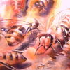 Biene, Honig, Imker, Bees at work