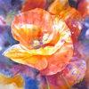 Blumen, Aquarellmalerei, Mohn, Rot