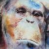 Chimp, Ape, Schimpanse, Menschenaffen