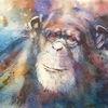 Chimp, Menschenaffen, Tiere, Tierportrait