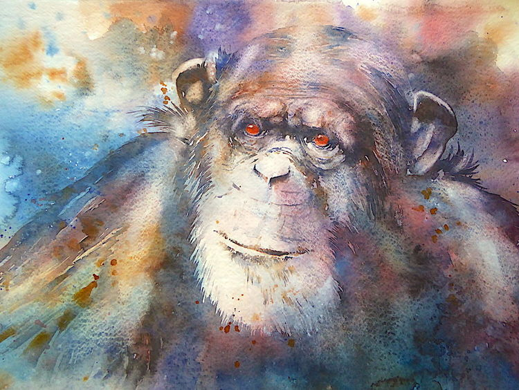 Chimp, Menschenaffen, Tiere, Tierportrait, Ape, Aquarellmalerei
