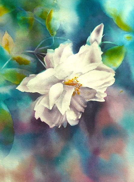 Garten, Aquarellmalerei, Rose, Weiß, Blumen, Aquarell
