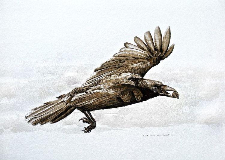 Vogel, Kolkrabe, Rabe, Zeichnungen
