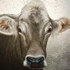 Gemälde, Acrylmalerei, Kuh, Blattmetall