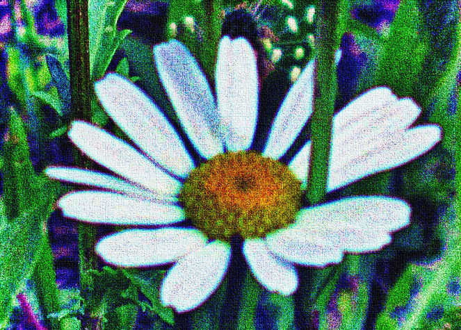 Natur, Blumen, Digitale kunst