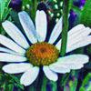 Blumen, Natur, Digitale kunst
