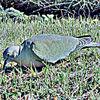 Vogel, Natur, Digitale kunst
