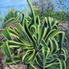 Kaktus, Ölmalerei, Pflanzen, Agaven