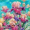 Garten, Blüte, Schwertlilie, Mai