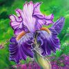Blumen, Violett, Blüte, Irisblüte