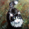 Katzenportrait, Katze, Rassekatze, Norweger kater
