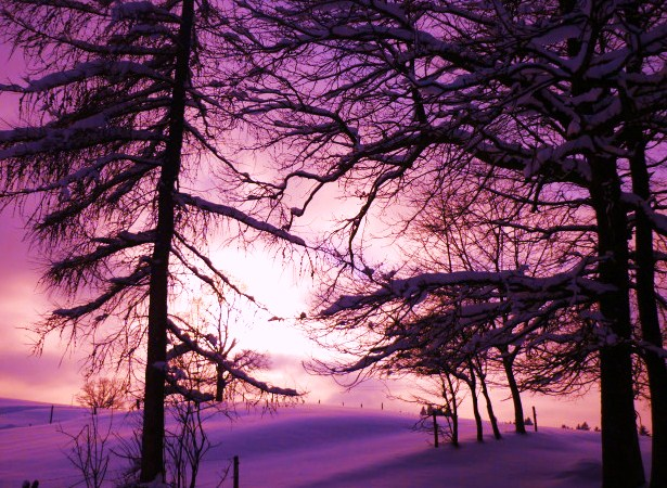 Winter, Licht, Stille, Berührung, Baum, Schnee