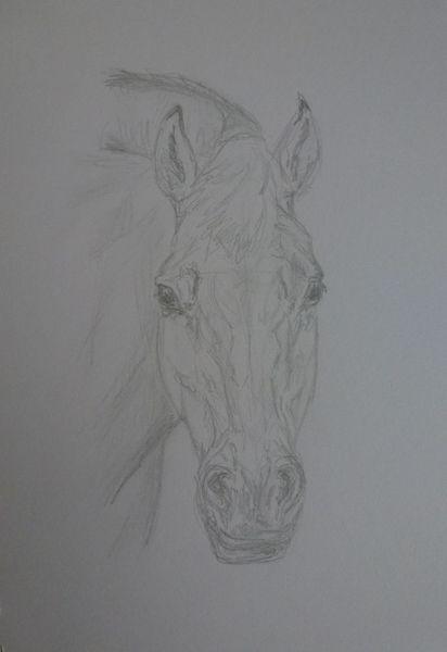 Pferdekopf, Pferde, Zeichnungen, Tiere,