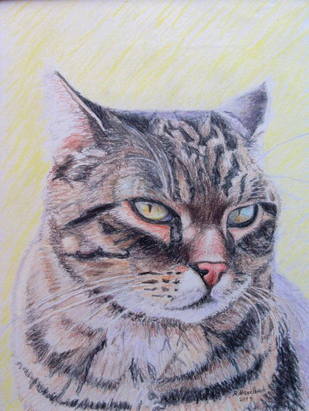 Katze, Zeichnungen