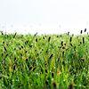 Gras, Tau, Wiese, Fotografie