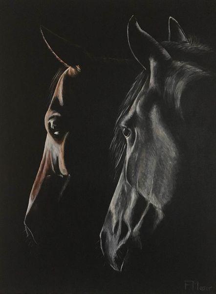 Schatten, Pferde, Portrait, Licht, Malerei