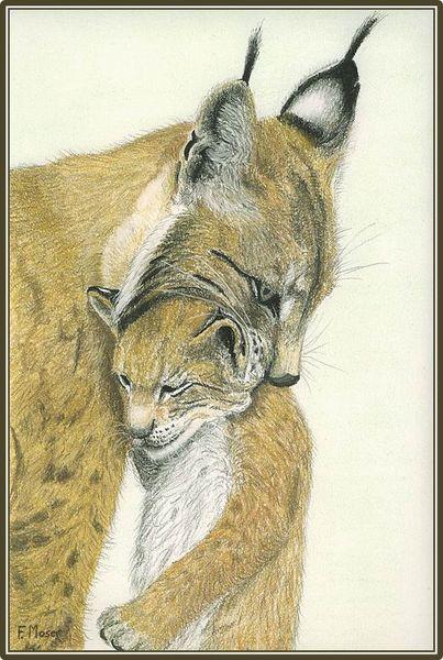 Luchs, Wild, Malerei