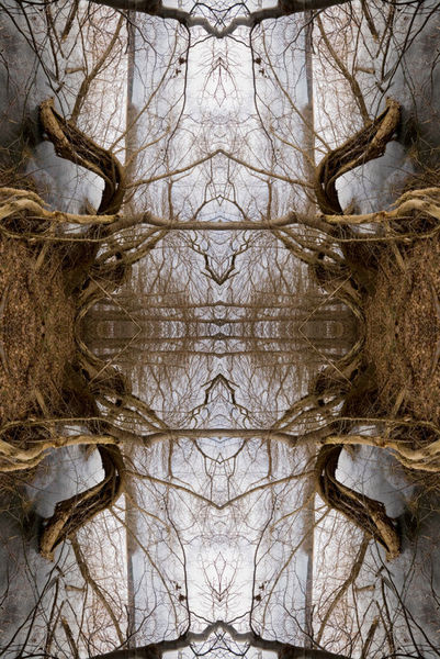Geometrie, Tor, Insekten, Augen, Spiegelung, Geist