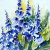 Blau, Blumen, Aquarell, Rittersporn