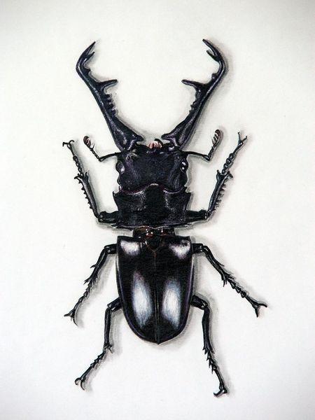 Hirschkäfer, Käfer, Tiere, Malerei