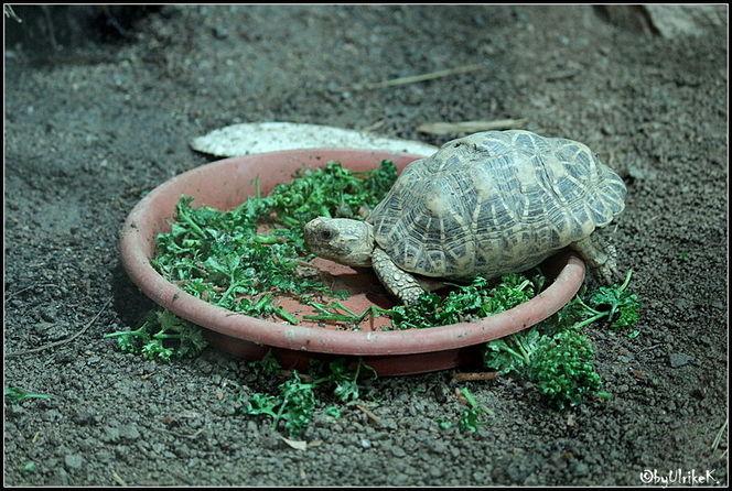 Schildkröte, Reptilium, Fotografie, Tiere