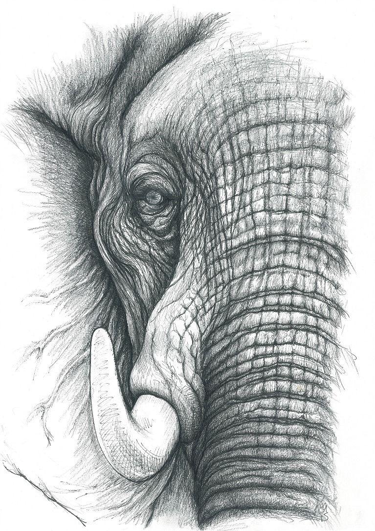 Elefant 506 Bilder Und Ideen Auf Kunstnet Monochrome Fotografie