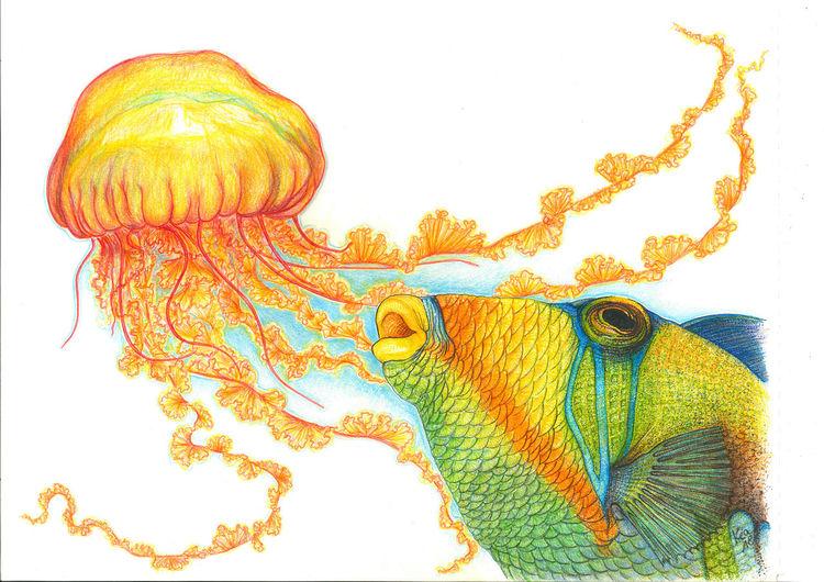 Qualle, Fisch, Zeichnungen,