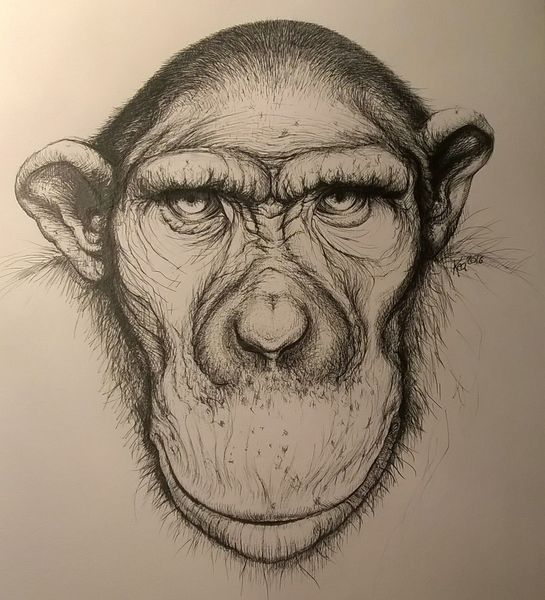 Portrait, Affe, Blick, Zeichnungen, Planet, Menschen