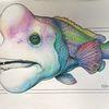 Kopf, Lippfisch, Augen, Schaf
