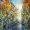Farben, Licht, Baum, Wasser