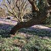 Frühlingssehnsucht, Krokus, Schneeglöckchen, Baum