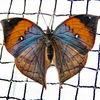Natur, Farben, Tiere, Insekten
