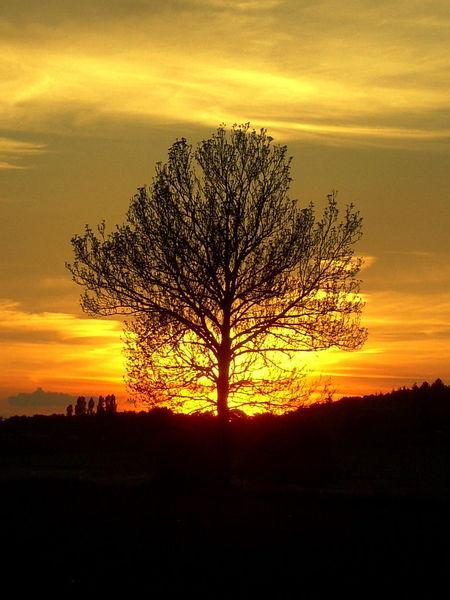 Sonne, Orange, Schwarz, Abend, Untergang, Fotografie