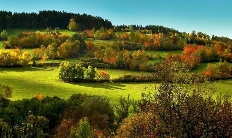 Wald, Landschaft, Bunt, Wiese, Herbst, Farben