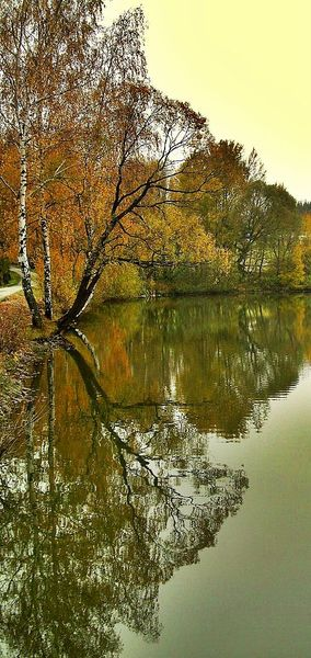 Baum, Herbst, Wasser, Spiegelung, Orange, Fotografie