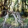 Hirsch, Holz, Wald, Wild