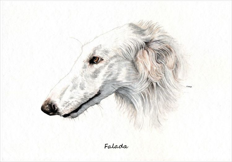 Hund, Barsoi, Windhund, Russischer windhund, Sighthound, Hundeportrait