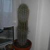 Deckungsgleiche zeugenaussagen reload, Umtopfen, Kaktus, Pinnwand