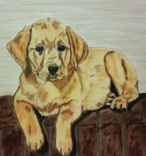 Pastellmalerei, Zeichnung, Portrait, Hundezeichnung, Zeichnungen,